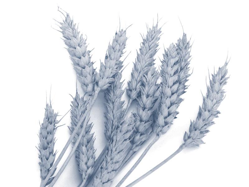 Landwirtschaftsrecht